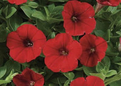Littletunia Bright Red